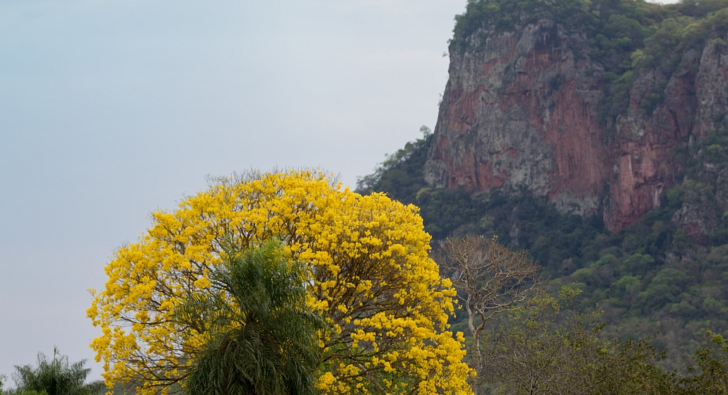 Estrada Parque Piraputanga Ipê